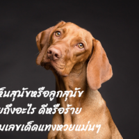 ฝันเห็นสุนัขหรือลูกสุนัขหมายถึงอะไร ดีหรือร้าย พร้อมเลขเด็ดแทงหวยแม่นๆ