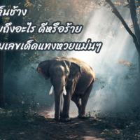 ฝันเห็นช้างหมายถึงอะไร ดีหรือร้าย พร้อมเลขเด็ดแทงหวยแม่นๆ
