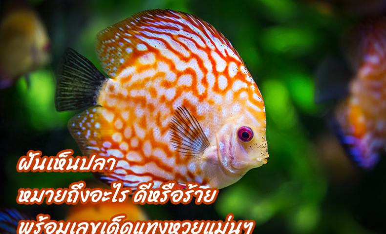 ฝันเห็นปลาหมายถึงอะไร ดีหรือร้าย พร้อมเลขเด็ดแทงหวยแม่นๆ