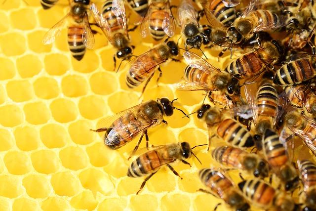 ฝันเกี่ยวกับผึ้ง
