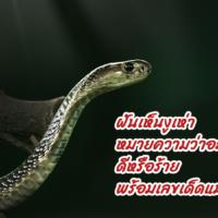 ฝันเห็นงูเห่าหมายความว่าอะไร ดีหรือร้าย พร้อมเลขเด็ดแม่นๆ