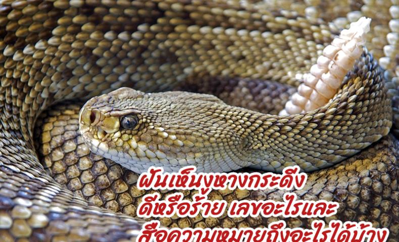 ฝันเห็นงูหางกระดิ่ง ดีหรือร้าย เลขอะไรและสื่อความหมายถึงอะไรได้บ้าง