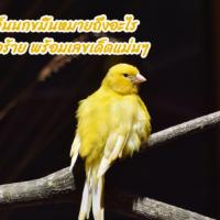 ฝันเห็นนกขมิ้นหมายถึงอะไร ดีหรือร้าย พร้อมเลขเด็ดแม่นๆ