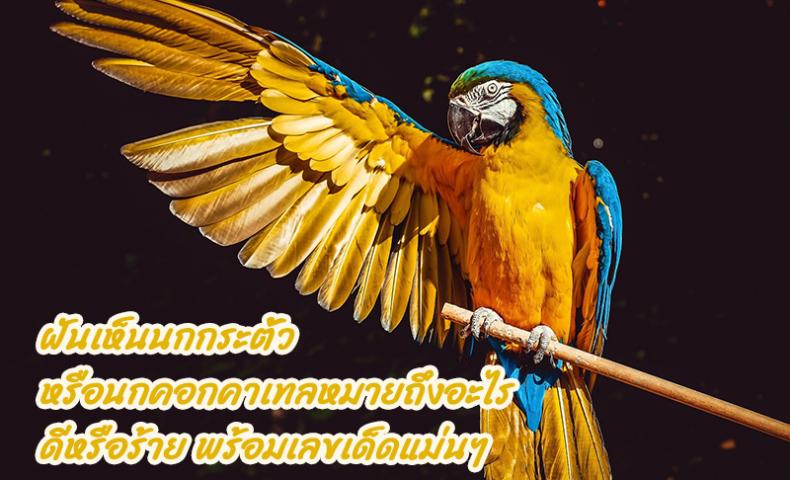 ฝันเห็นนกกระตั้ว หรือนกคอกคาเทลหมายถึงอะไร ดีหรือร้าย พร้อมเลขเด็ดแม่นๆ