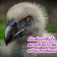 ฝันเห็นนกอีแร้ง หมายถึงอะไร ดีหรือร้าย พร้อมเลขเด็ดแม่นๆ