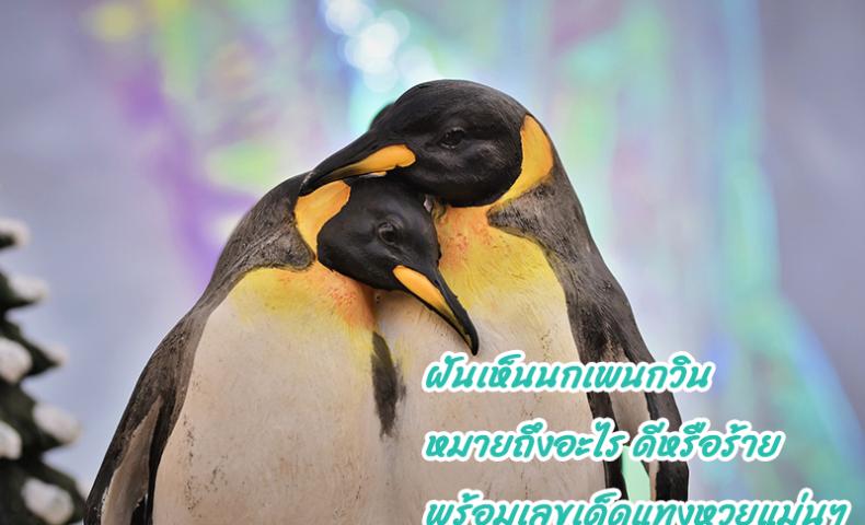 ฝันเห็นนกเพนกวิน หมายถึงอะไร ดีหรือร้าย พร้อมเลขเด็ดแทงหวยแม่นๆ