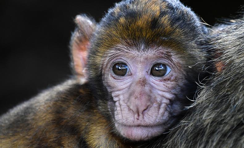 ฝันเห็นลิง หมายถึงอะไร ดีหรือร้าย พร้อมเลขเด็ดแทงหวยแม่นๆ